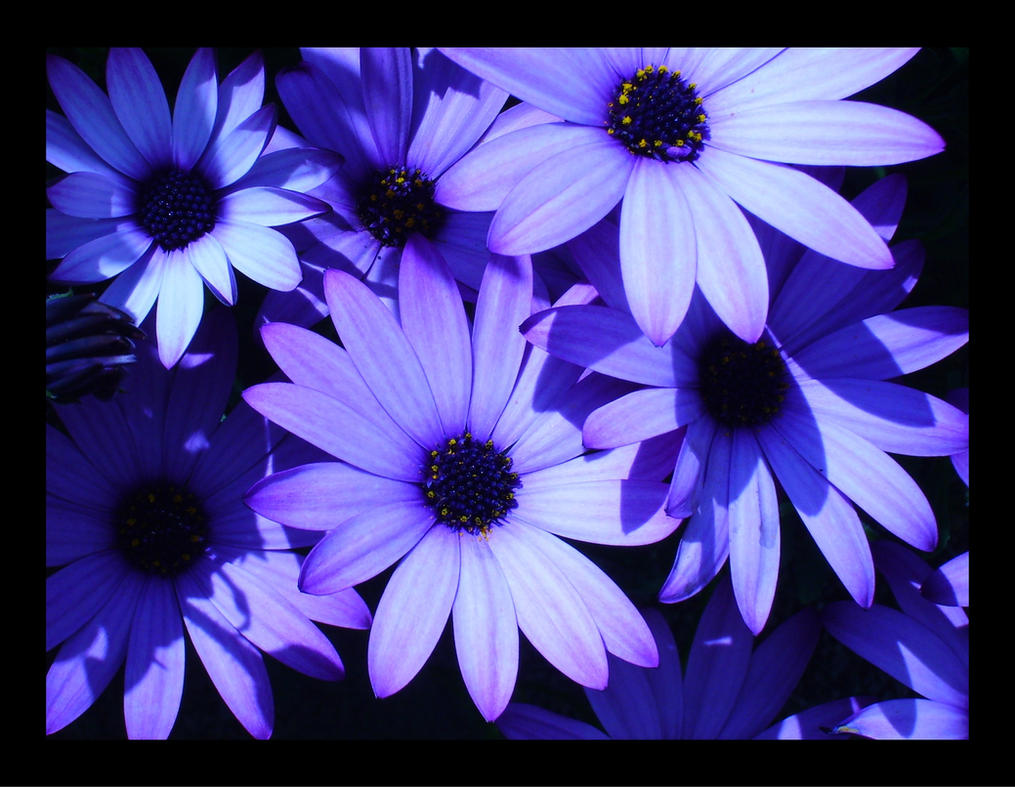 Flowers by hellfire321