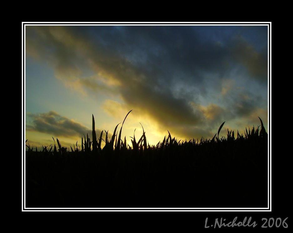 Sunset Across The Grass II by hellfire321