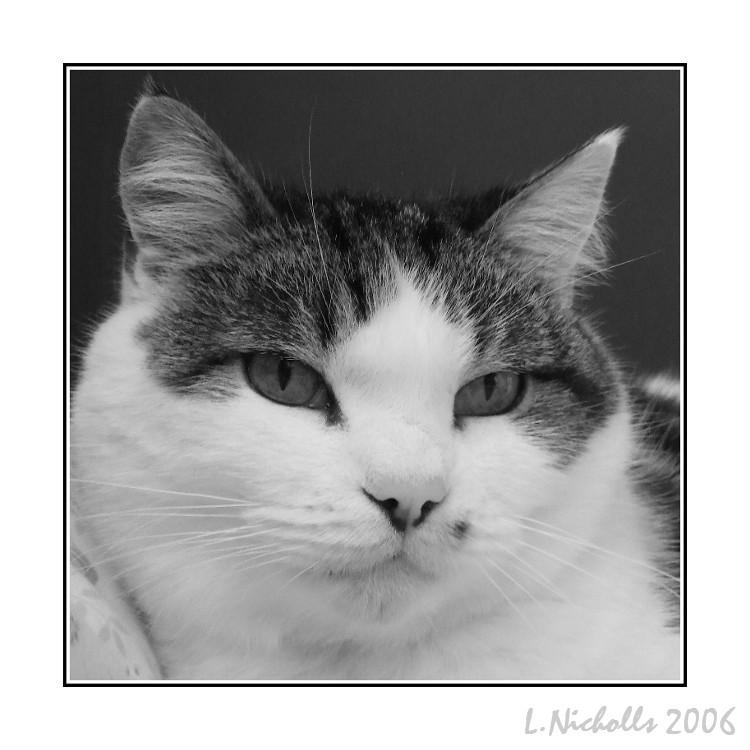 My Cat 2 by hellfire321