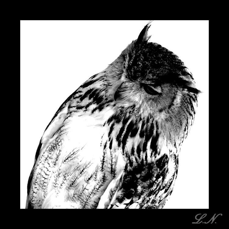 Eagle Owl by hellfire321