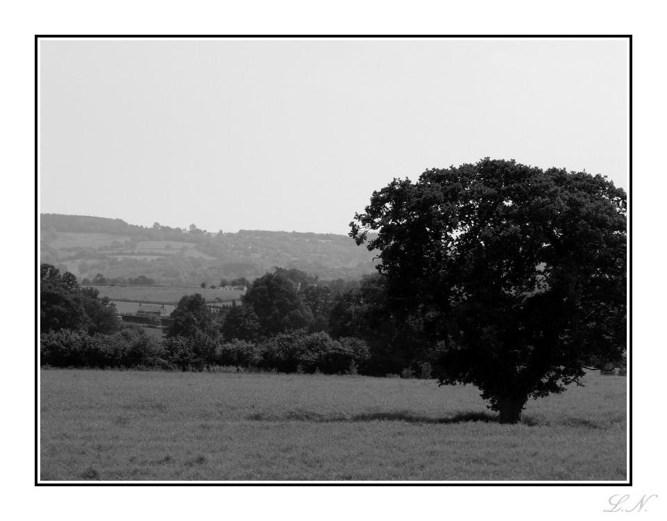 Devon by hellfire321