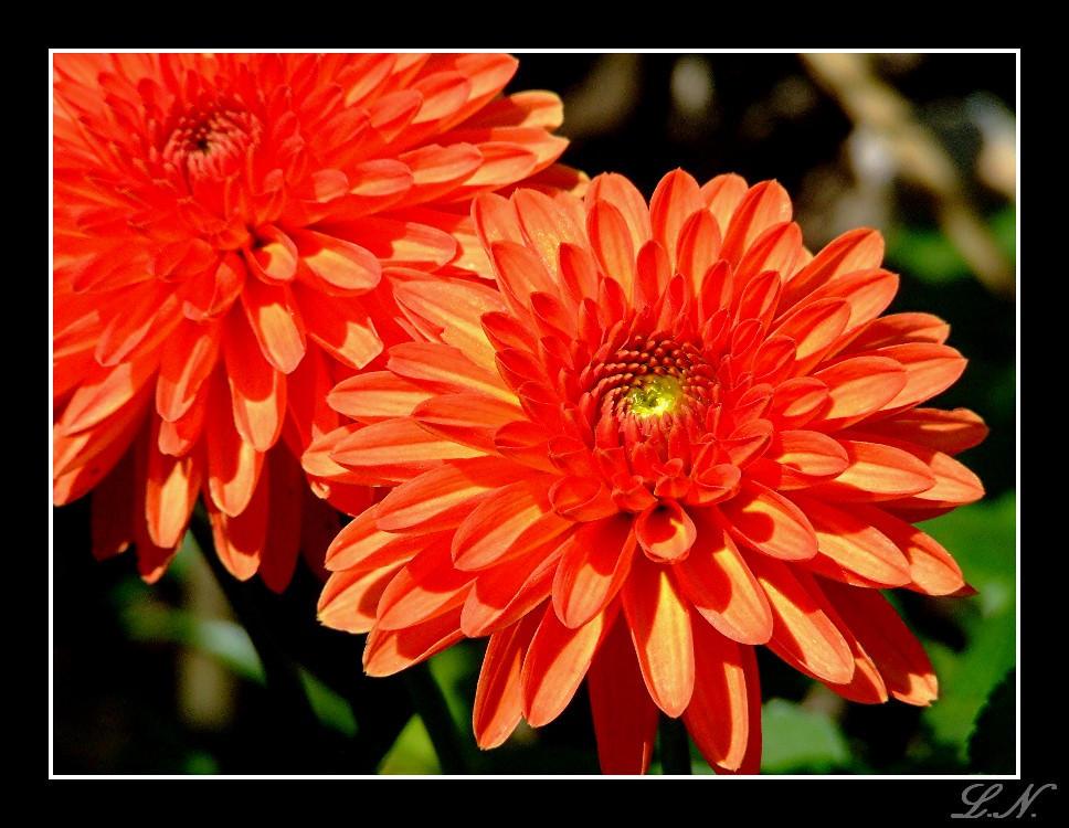 Orangey by hellfire321