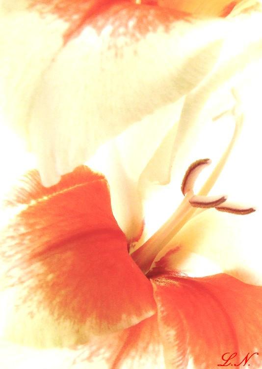 Orange Delight by hellfire321