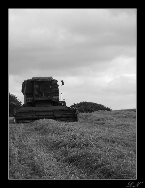 Farm Yard Beast by hellfire321