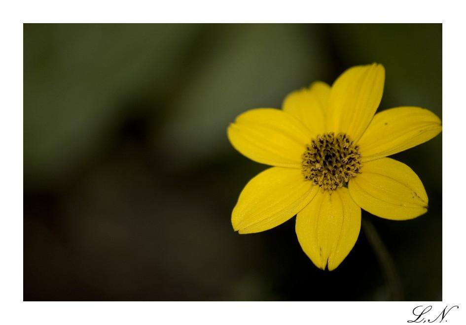 Sunny Yellow by hellfire321