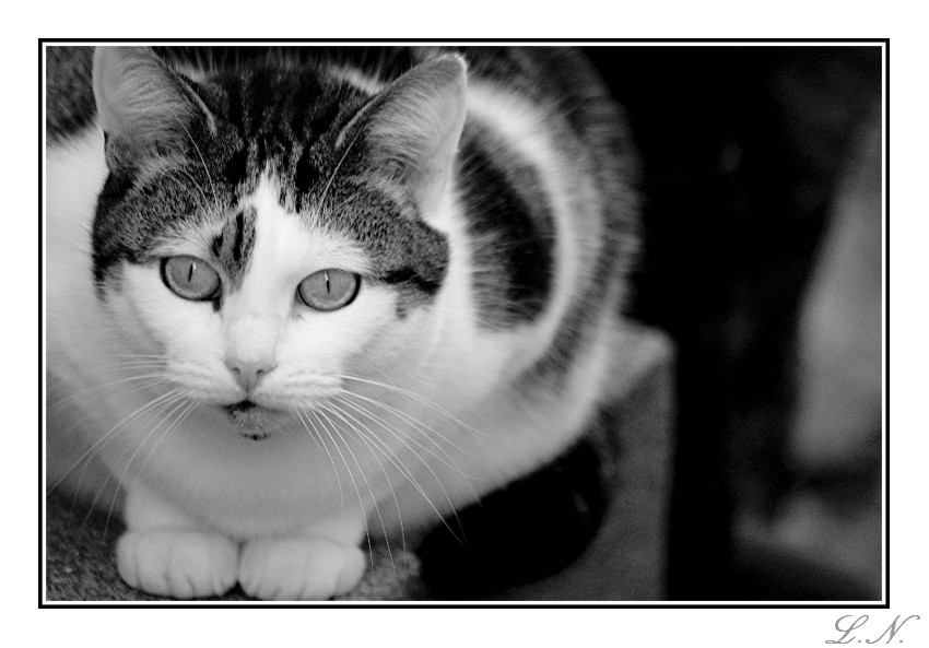 Mousehole Cat by hellfire321