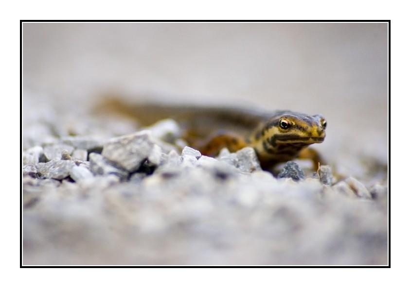 Newt by hellfire321