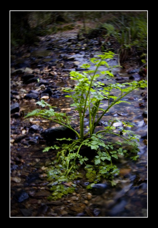 River Weeds by hellfire321