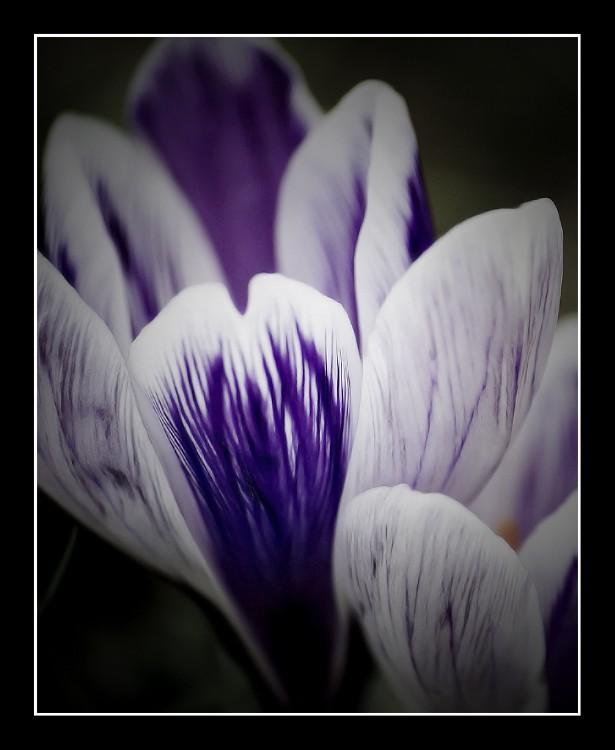 Purple by hellfire321