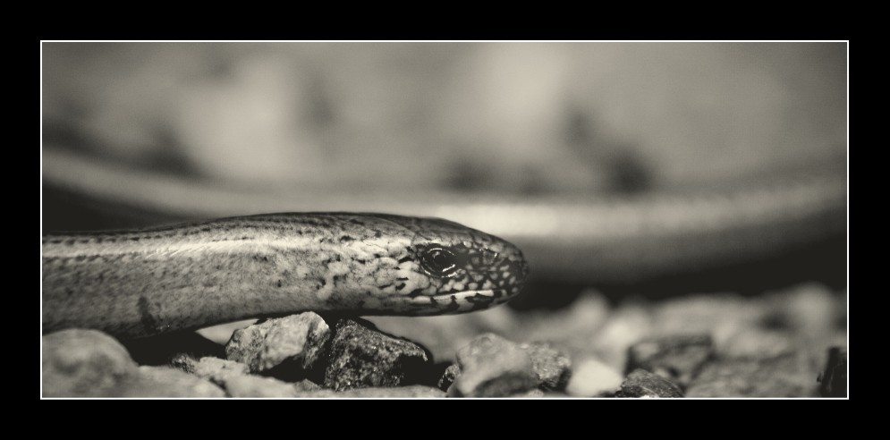 Slow Worm by hellfire321