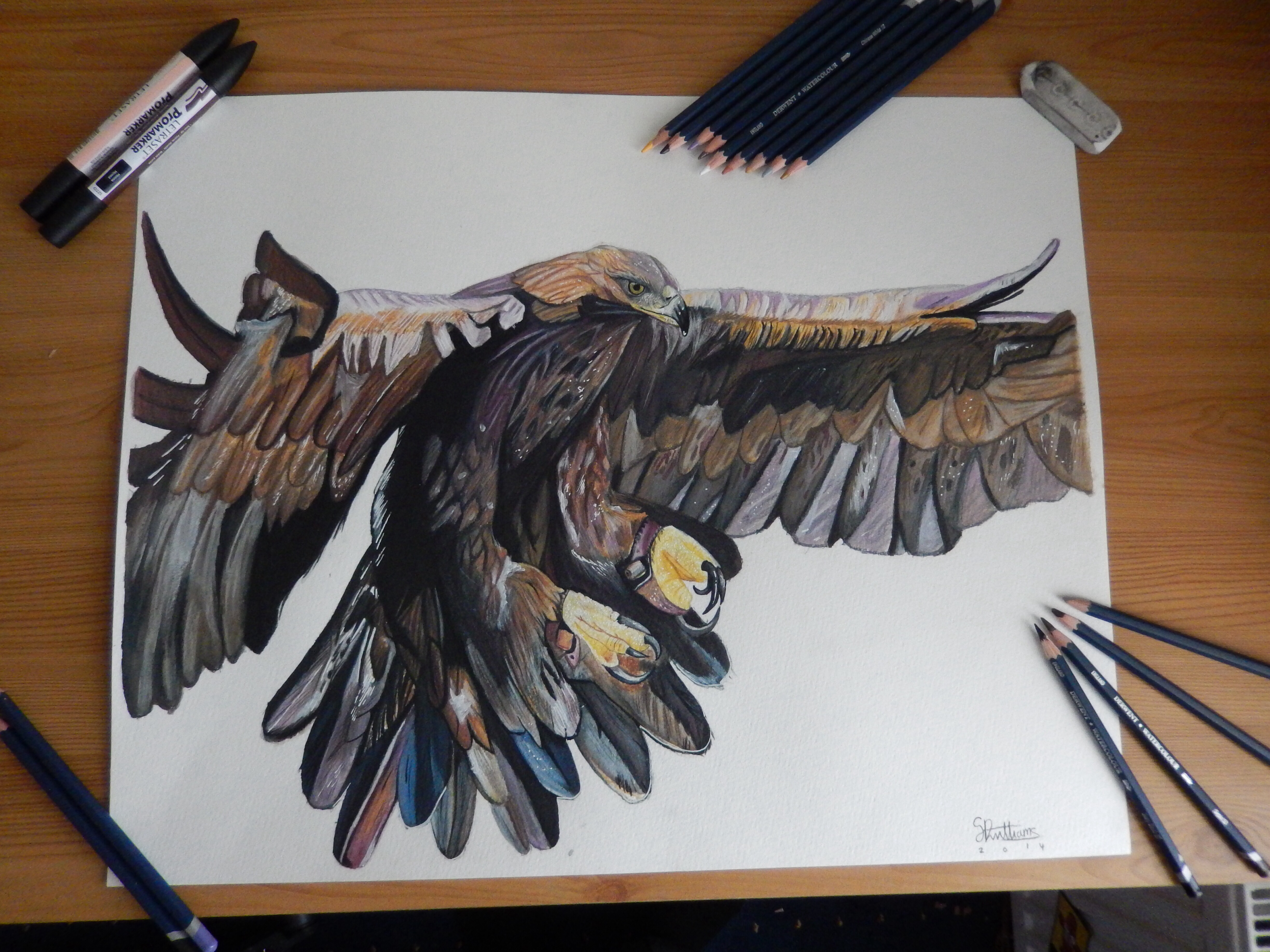 golden eagle colour pencil drawing by sdw art on deviantart