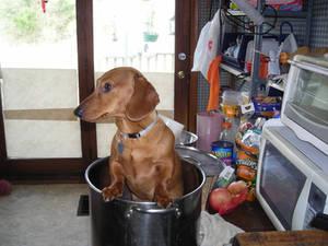 Making Hotdogs