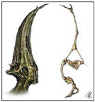 Caecusfugiens Wing Anatomy