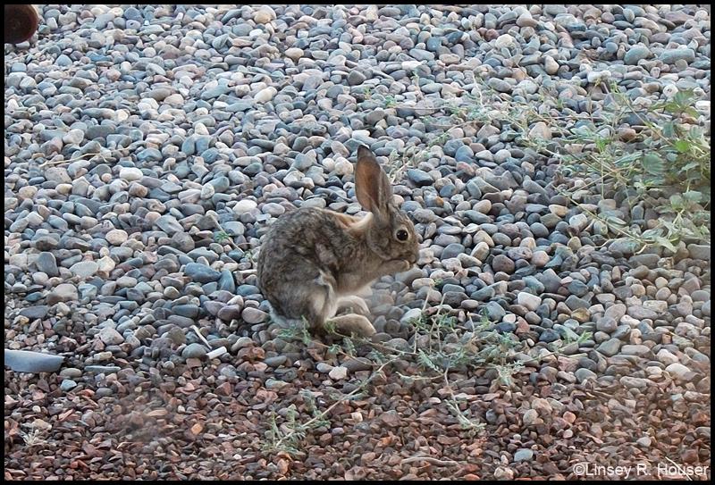 Backyard Bunny by tatsuyasaverem