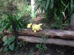 Pikachu in the Park by MarioBlade64