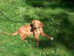 Mydog by therock