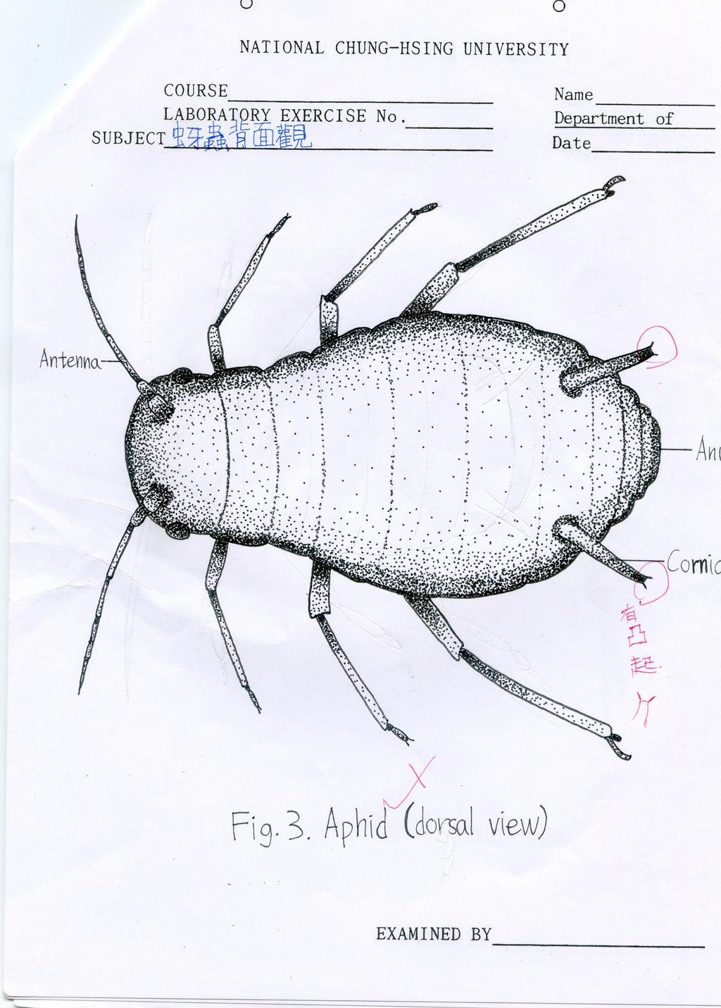 Entomology Point Diagram
