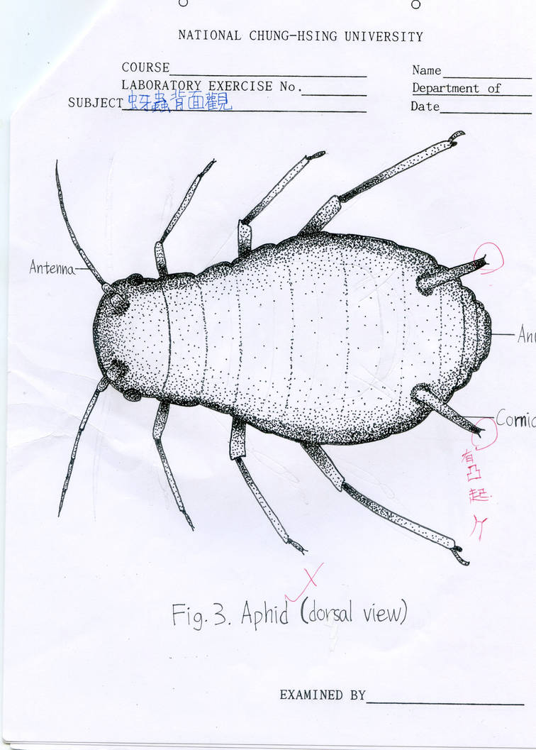 entomology point diagram---aphid by gogosanford