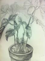 Plant Drawing by Noiz-Bleu
