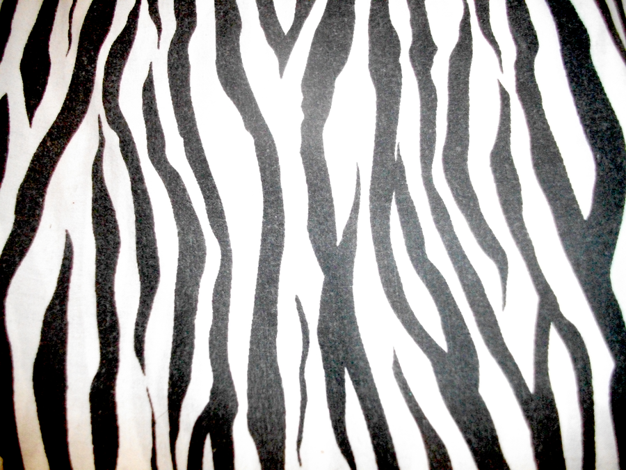 Zebra Print by MonsterGoRAWR