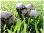 13. Mushrooms