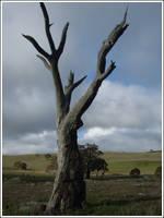 20. Dead Tree by fire-works