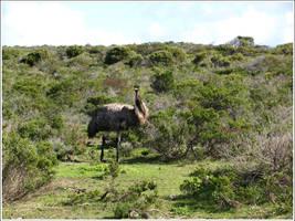 32. Emu by fire-works