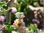 61. Cabbage White