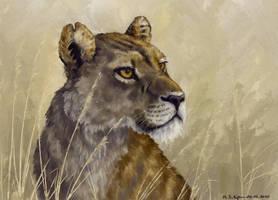 lioness_05_20