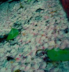 something like springtime by suzumetori