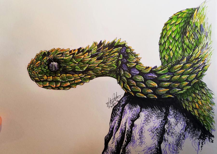 bush viper by childofgod on deviantart