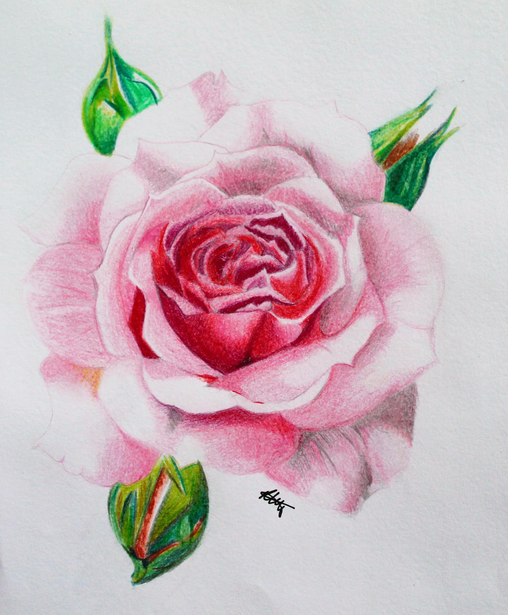 realistic rose by rachaelelizabethfry on deviantart