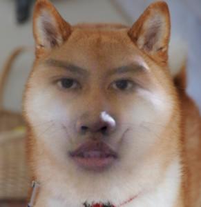 quimchee's Profile Picture