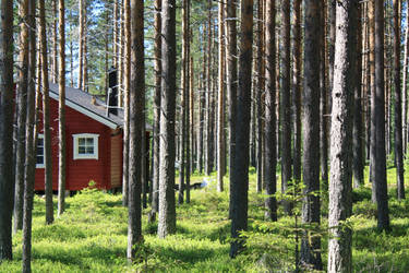 Swedish Forest by Pawkeet