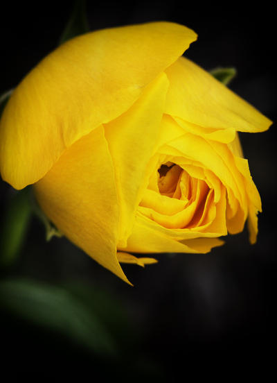 Blooming by firesign24-7