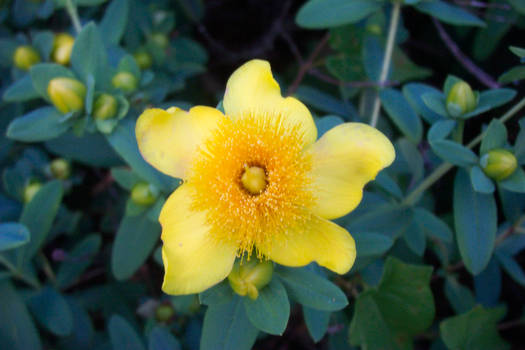 West Virginia Flowers