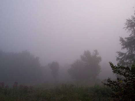 West Virginia Morning 1