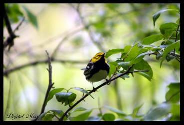 Bird 2 by DigiM355