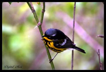 Bird 5 by DigiM355
