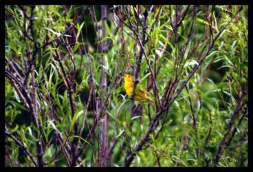 Bird 7 by DigiM355