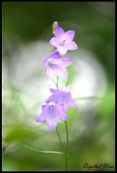 Flowers 3 by DigiM355