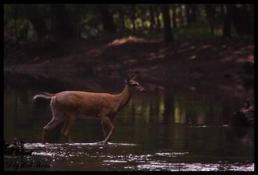 Deer 1 by DigiM355