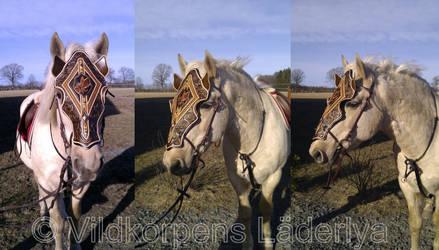 Shaffron...Horse Pictures