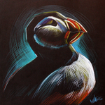 Puffin in the dark