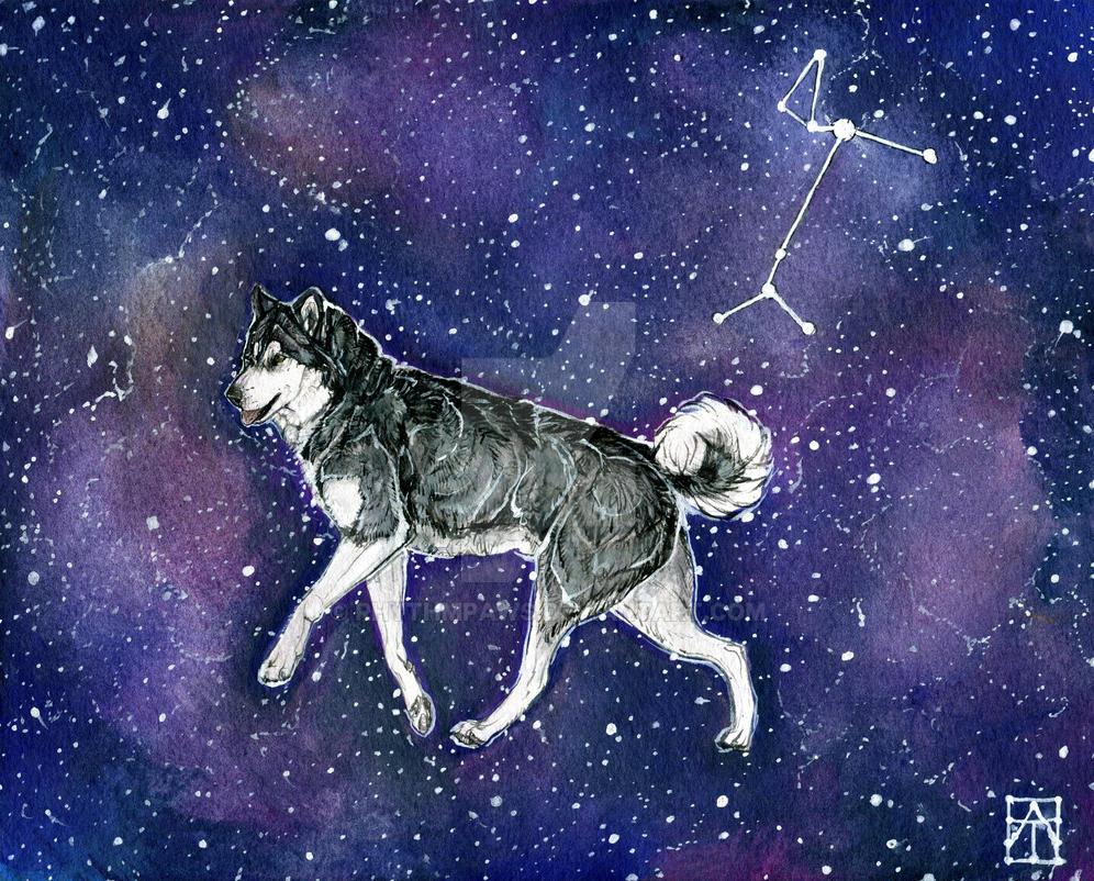 Alpha Canis Major (Hopefully This One Works?) by Rhythmpaws