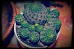 Luck Cactus by FranticMezmer