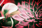 Flamboyant by FranticMezmer