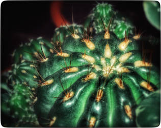 Night of the Cactus Bumpkins by FranticMezmer