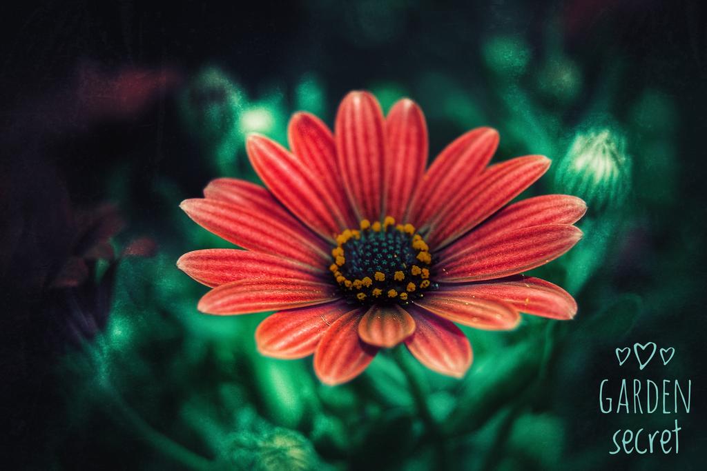 Garden Secret by FranticMezmer