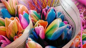 Fabulousense Tulips